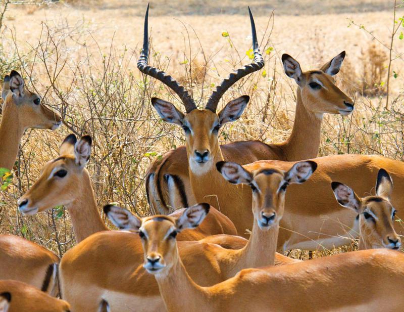 坦桑尼亚动物游猎 & 度假胜地桑给巴尔岛